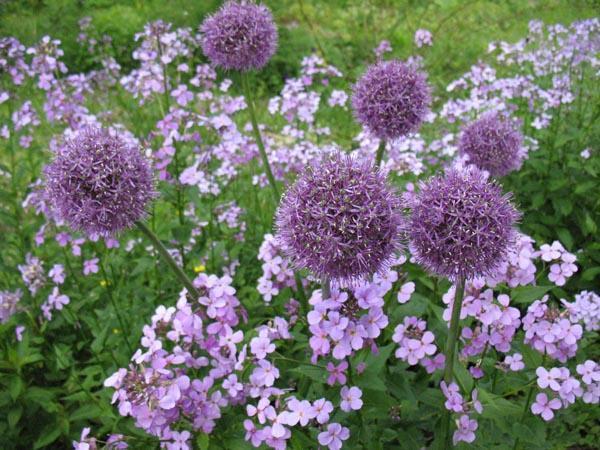 Цветники в Пензе