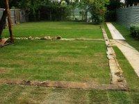 рулонный газон в день укладки