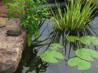 болотце и его обитатели